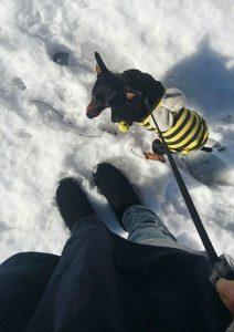 ゴン太と雪道の散歩