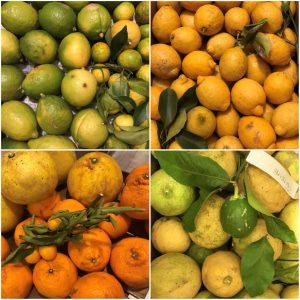 尾道市高根島の橋本さんの無農薬レモンと柑橘類