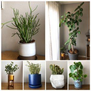 植物ブームがやってきた!